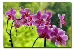 Цветы_68