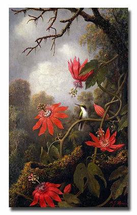 """Хед М., """"Колибри и страстоцветы"""""""