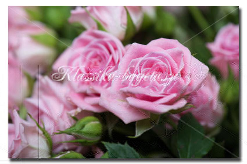 Цветы_59