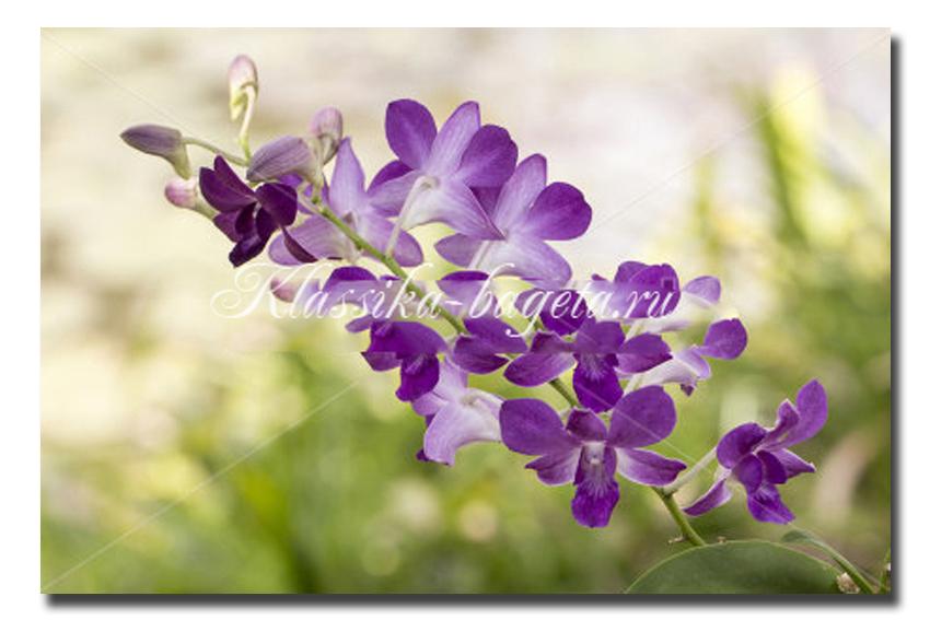 Цветы_67