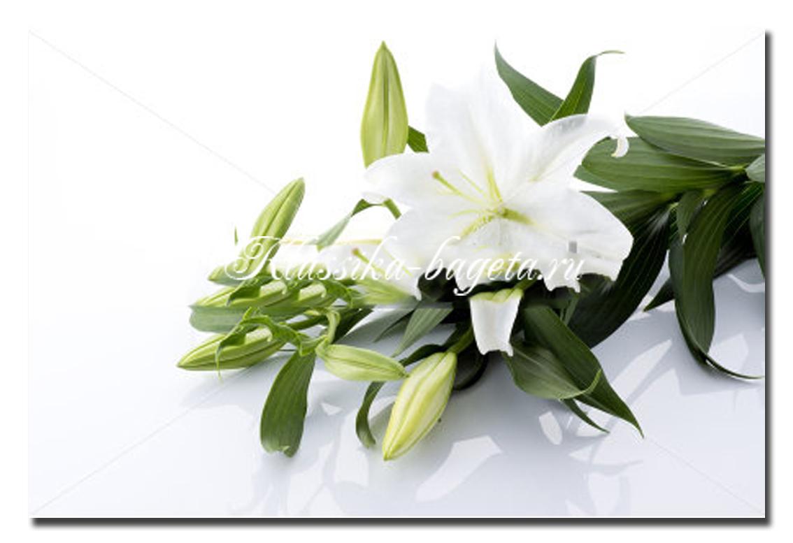 Цветы_13
