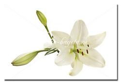 Цветы_14
