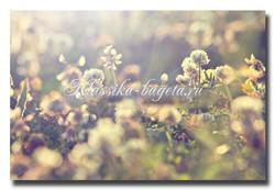 Цветы_53
