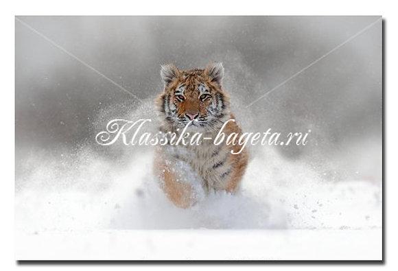 Животные_118