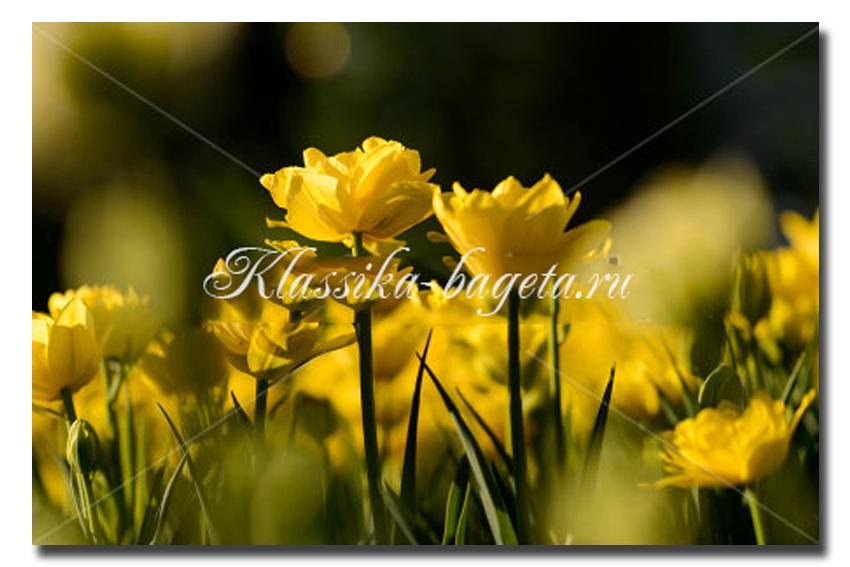 Цветы_106