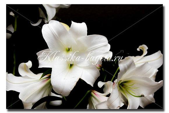Цветы_83