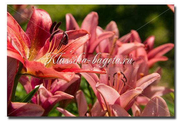 Цветы_82