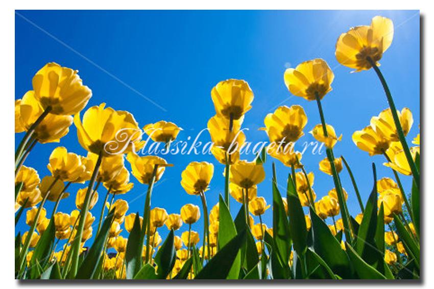 Цветы_91