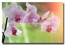 Цветы_43