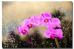 Цветы_66