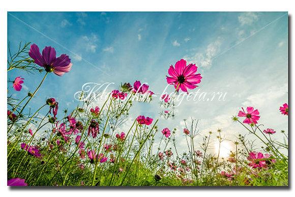 Цветы_63