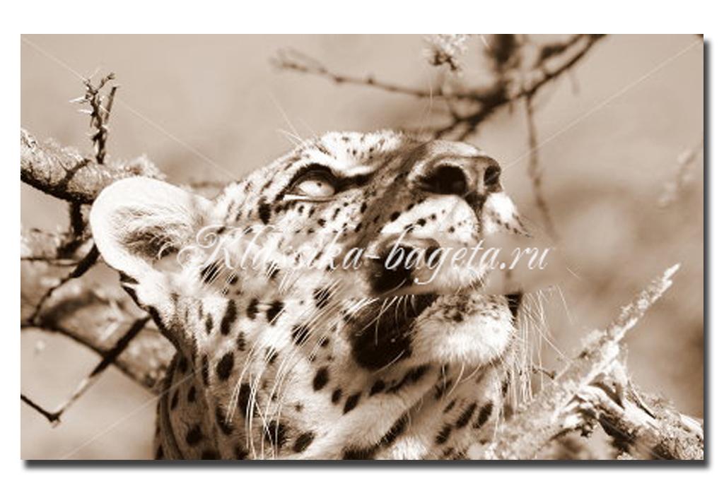 Животные_037
