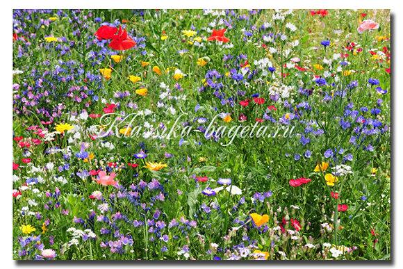 Цветы_114