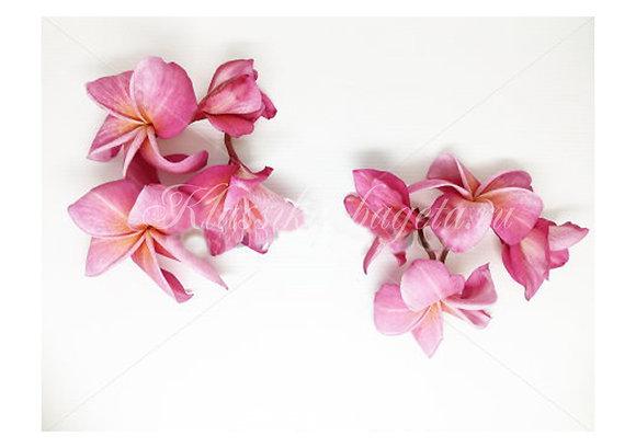 Цветы_130