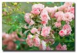 Цветы_8
