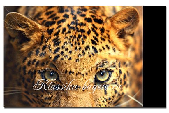 Животные_40