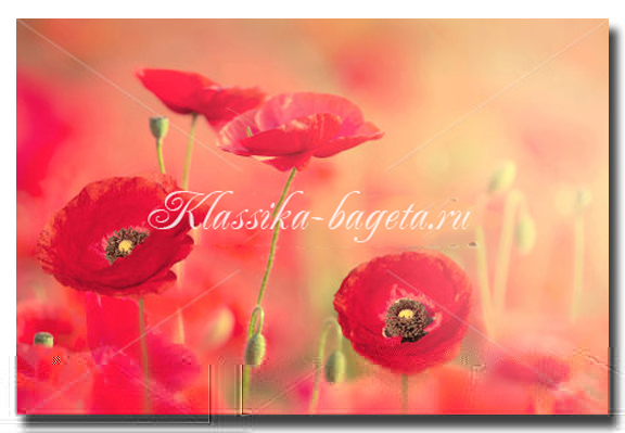 Цветы_50