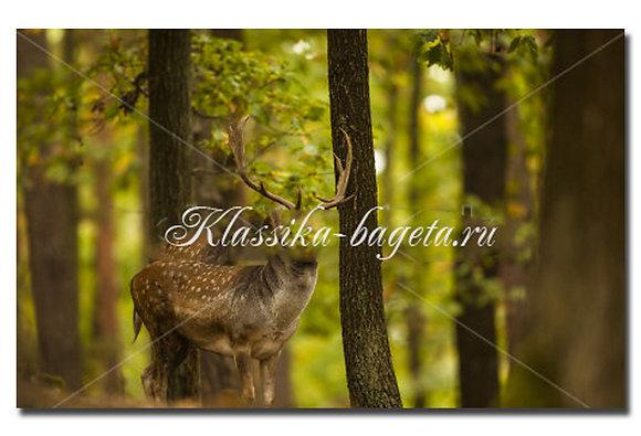 Животные_65