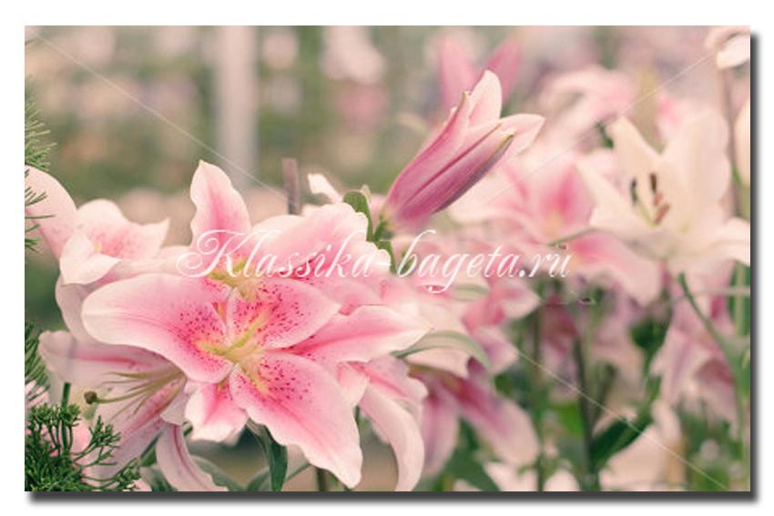 Цветы_74