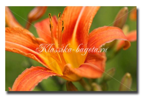 Цветы_2