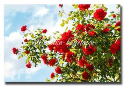 Цветы_51