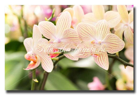 Цветы_45