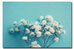 Цветы_81
