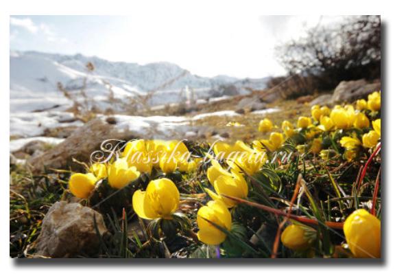 Цветы_10