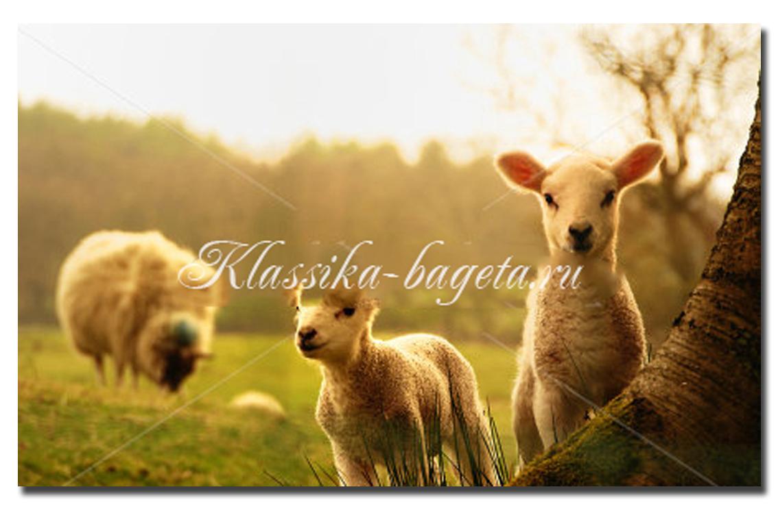 Животные_116