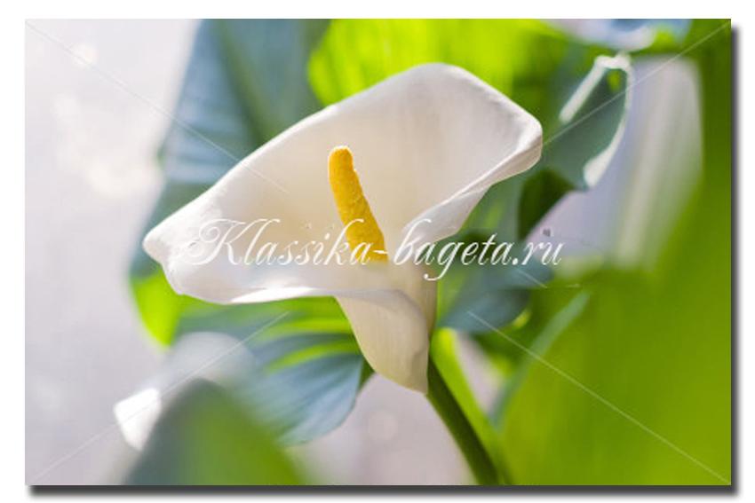 Цветы_75