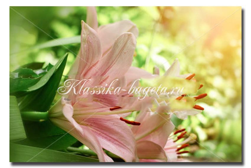 Цветы_76