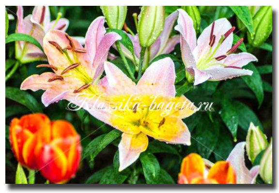 Цветы_6