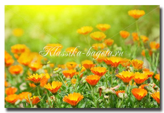 Цветы_57