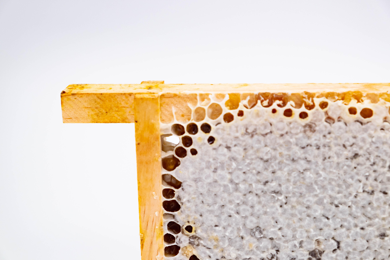 Honeycomb Bush Haven Farm Product images