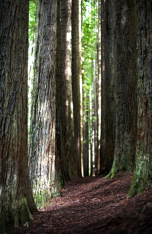 Redwoods, Otways