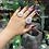 Thumbnail: Solar Quartz Continuum Ring
