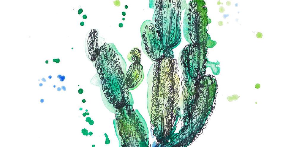Daisy Anemones Cactus