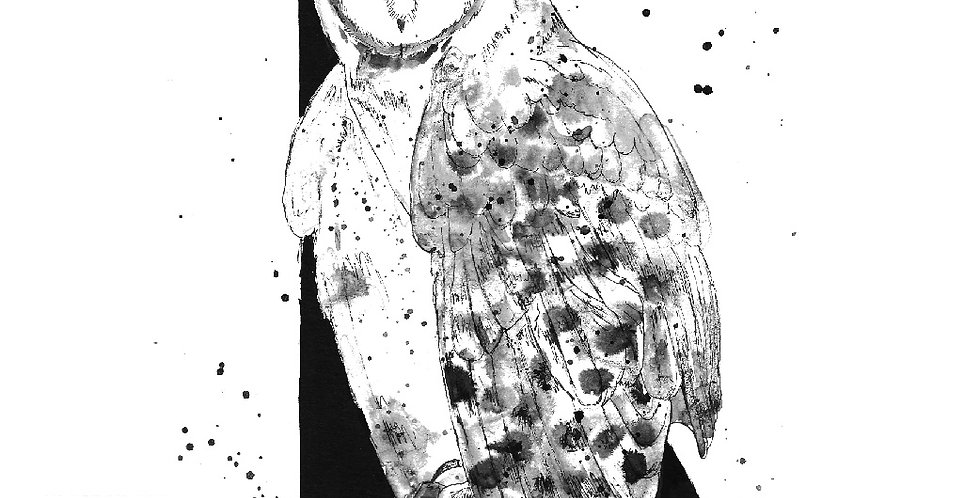 Triangle Owl