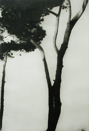 'Pineto No 3' (part of a set of 3 etchings Pineto No1 & 2)
