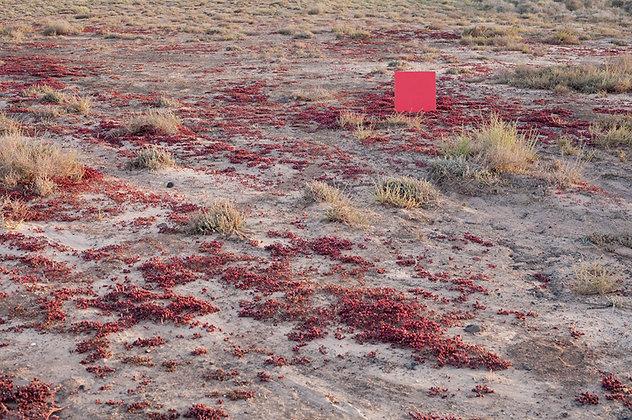 Fuerteventura 08, 2012