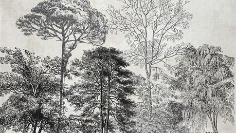 M. Royal Palms 17