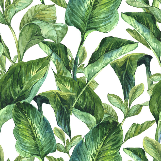 A. Tropicales 14
