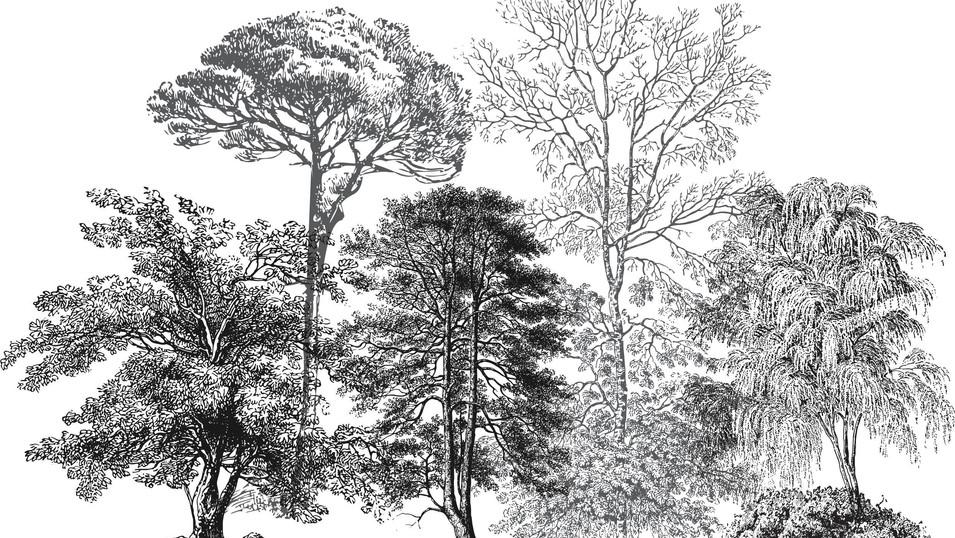 M. Royal Palms 18