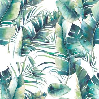 A. Tropicales 06