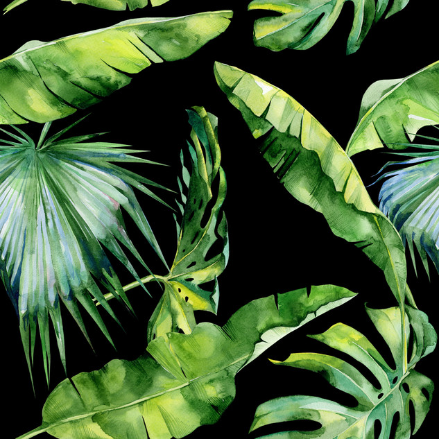 A. Tropicales 30