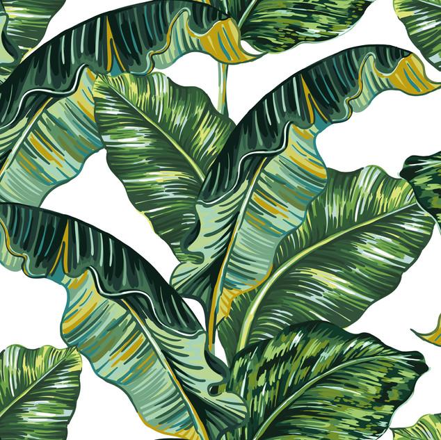 A. Tropicales 32