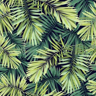 A. Tropicales 17