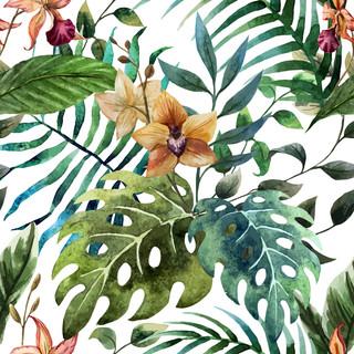 A. Tropicales 25