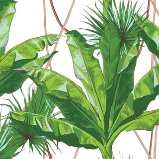 A. Palms 20