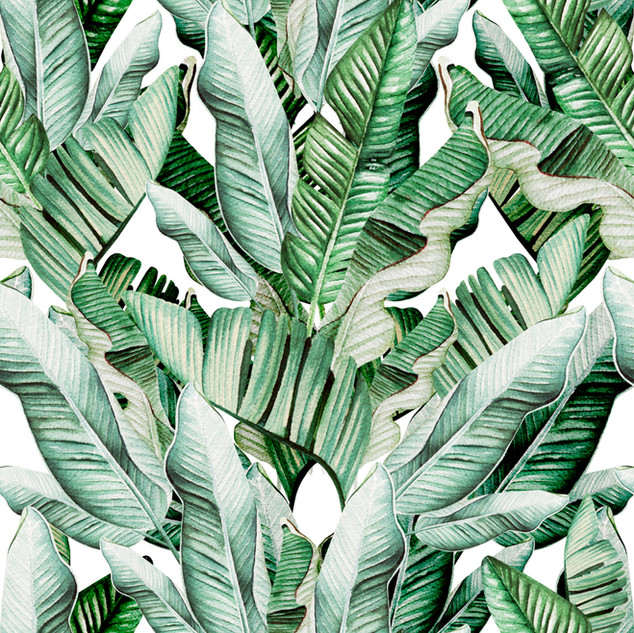 A. Tropicales 20
